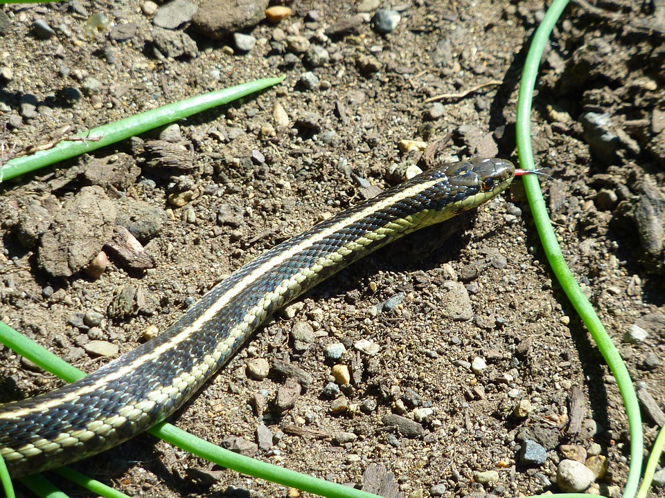 snake-286316_960_720