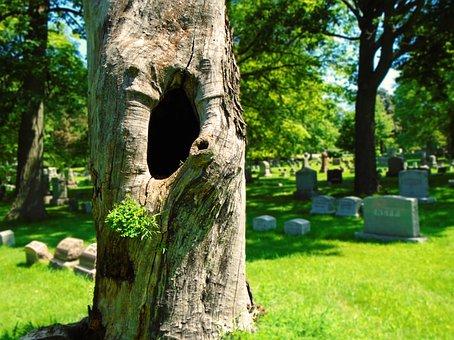 dead-tree-2475935__340