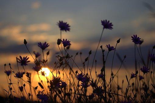 flowers-2805071__340