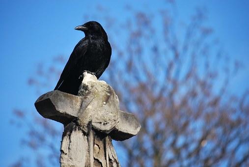 raven-553196__340