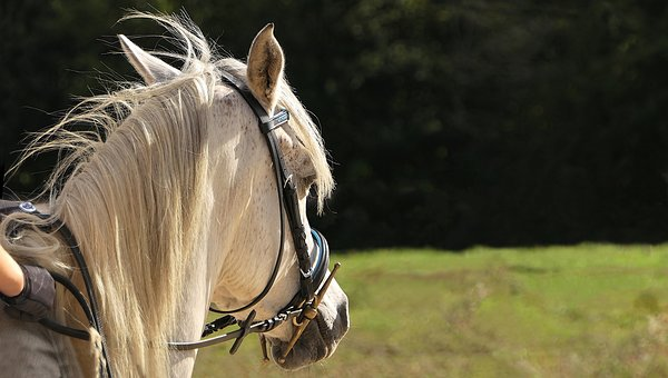 horse-3030892__340