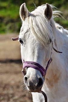 horse-3295789__340