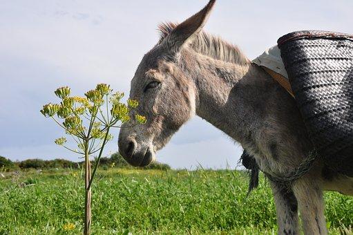 donkey-1714138__340