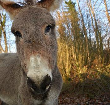 donkey-2647110__340