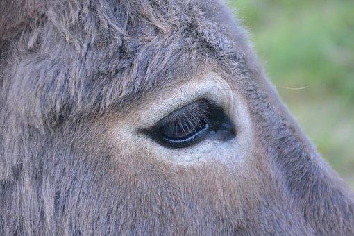 donkey-2761523__340