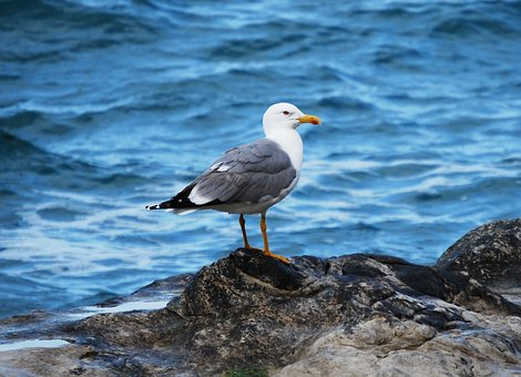 seagull-3022455__340
