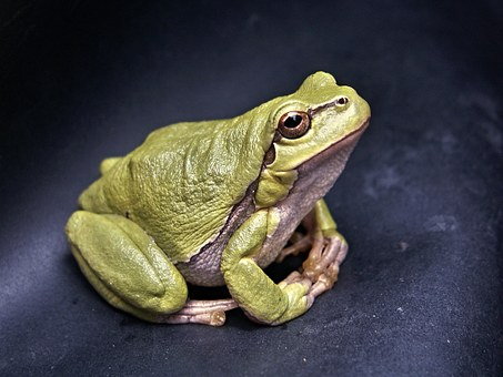 frog-111179__340