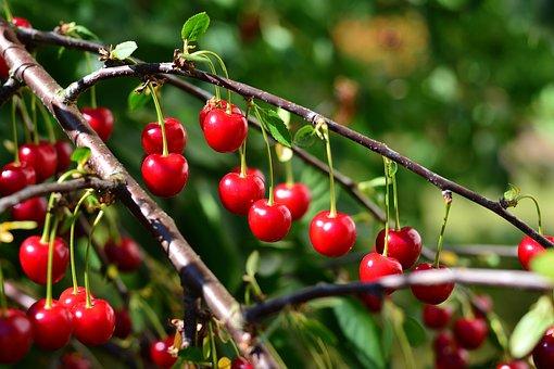 cherries-3511927__340
