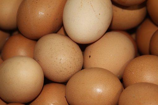 egg-3413544__340