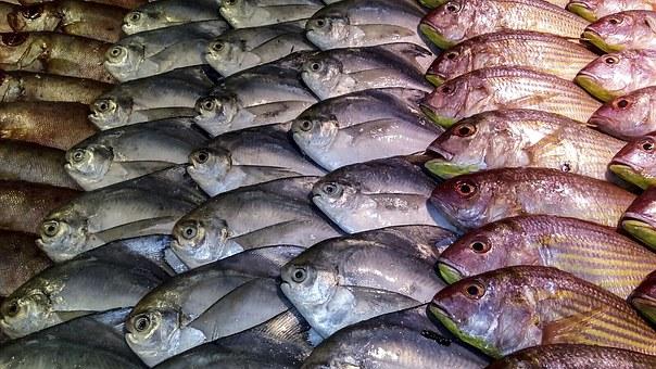 fish-1054207__340