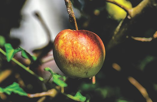 apple-3640970__340