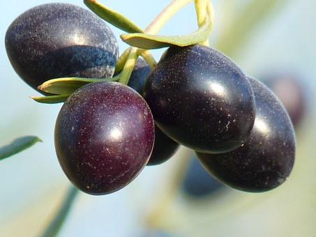 olives-15016__340 (1)