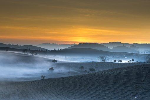 tea-plantation-3358870__340