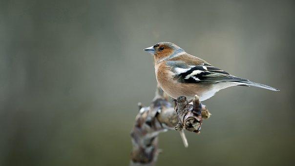 bird-3901852__340