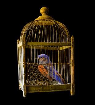 Free your Bird|پرنده خود را آزادکنید