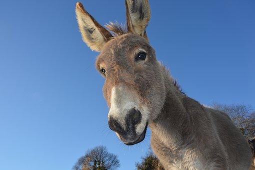 donkey-2996965__340