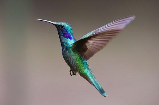 hummingbird-2139279__340