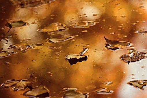 leaf-3841703__340