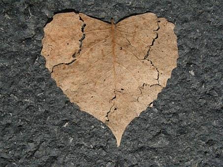 heart-742712__340