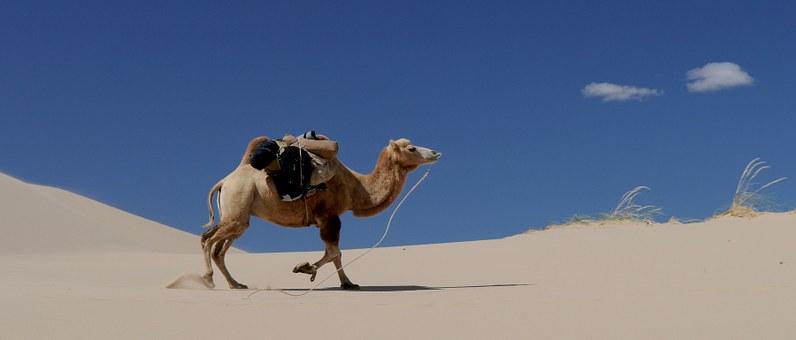 camel-692648__340