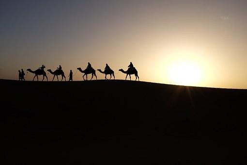 camels-1149803__340