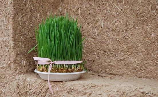 grass-532563__340