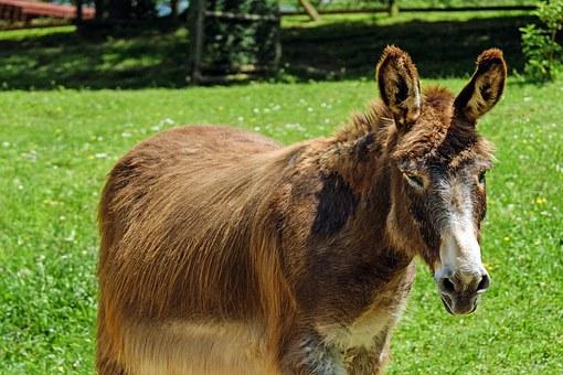 donkey-1449163__340