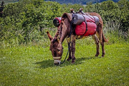 donkey-3427293__340