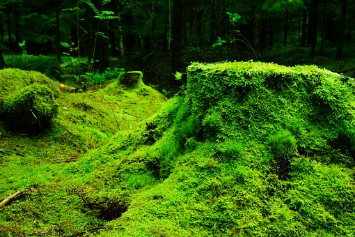 forest-483206__340