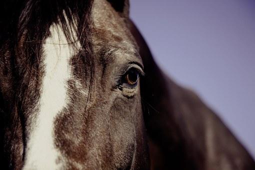horse-594191__340