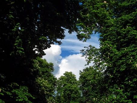 tree-220664__340