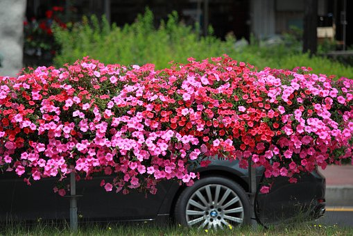 flowers-3359758__340