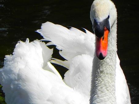 swan-18829__340