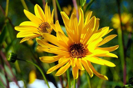flower-4495936__340
