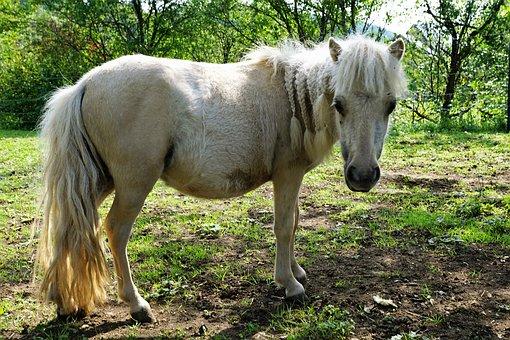 pony-2833233__340