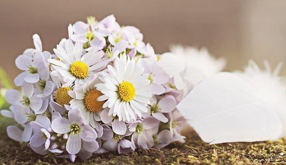 wildflowers-2218479__340