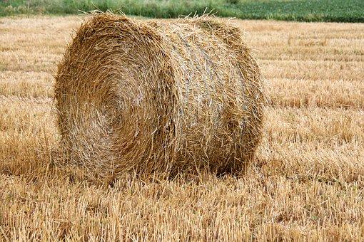 Hay's thief|دزد کاه