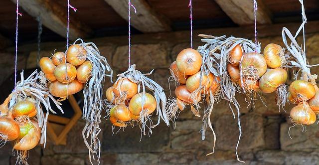 onions-4468045_640
