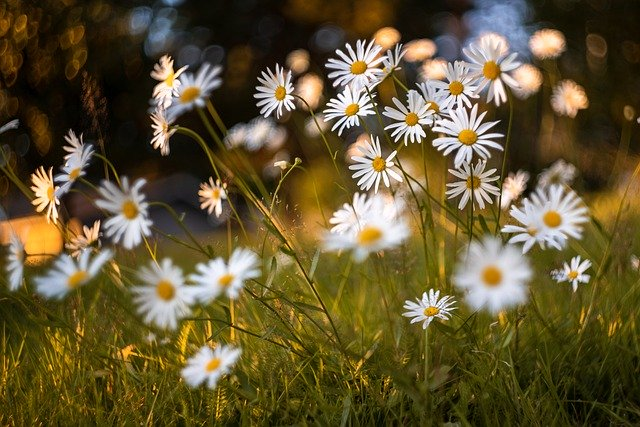 flowers-5479950_640